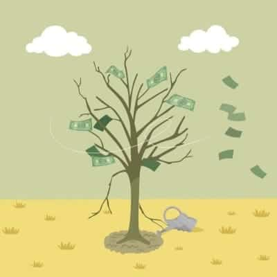 money tree can die with affiliate marketing for bloggers