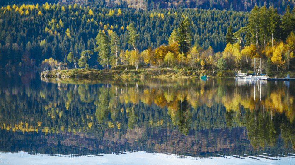 flickr free stock photos autumn forrest